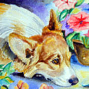 Petunias - Pembroke Welsh Corgi Poster by Lyn Cook