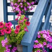Petunias On Blue Porch Poster