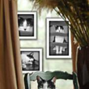 Phat Cat Poster