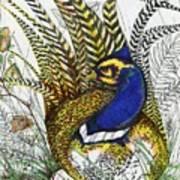 Pheasant Blue Poster