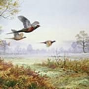 Pheasants In Flight  Poster