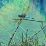 Photo Painted Dragonfly Poster