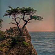 Photogenic Tree Poster