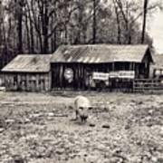 Pig Farm Lot B Poster