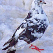 Pigeon On Ice  1 Poster