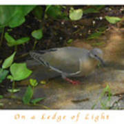 Pigeon Poster Poster