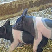 Piggyback Poster