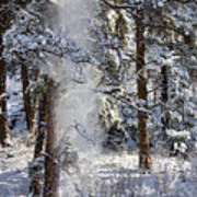 Pike National Forest Snowstorm Poster
