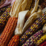 Pile Of Indian Corn Poster