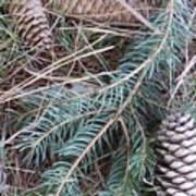 Pine Cone Brush Poster