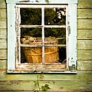 Pine Cones In The Window Poster
