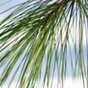 Pine Needles Series 3 Poster