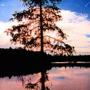 Pine Tree By Peck Lake 5 Poster