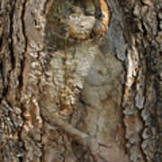 Pine Tree Nymph Poster