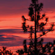 Pine Tree Sunrise Poster