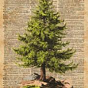 Pine Tree,cedar Tree,forest,nature Dictionary Art,christmas Tree Poster