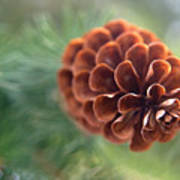 Pinecone-1 Poster