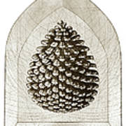 Pinecone Poster by Charles Harden