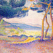 Pines Along The Shore, 1896 Poster