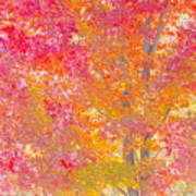 Pink And Orange Autumn Poster