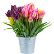 Pink And Violet  Tulips Poster
