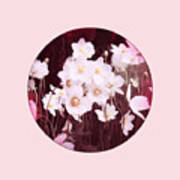 Pink And White Anemones Poster