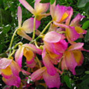 Pink And Yellow Tropical Flowers Poster