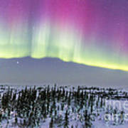 Pink Aurora Over Boreal Forest Poster