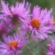 Pink Autumn Flowers Poster