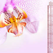 Pink Blotchy Orchid Calendar 2016 Poster