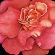 Pink Blush Poster