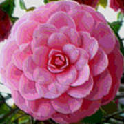 Pink Camellia Dream  Poster