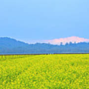 Pink Cloud Over The Mustard Fields Poster