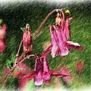 Pink Columbines Poster