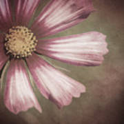 Pink Cosmos Painting Poster