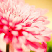 Pink Daisy Subdued Poster