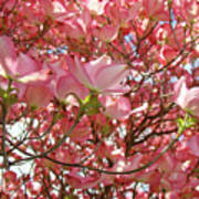 Pink Dogwood Flowering Tree Art Prints Canvas Baslee Troutman Poster