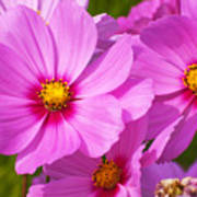 Pink Flower Conspirisy Poster
