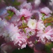 Pink Flowering Almond Poster