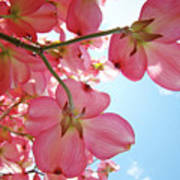 Pink Flowering Dogwood Tree Art Prints Blue Sky Baslee Troutman Poster