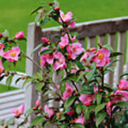 Pink Flowers By The Bench Poster