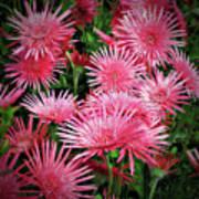 Pink Gerbera Heaven Poster