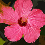 Pink Hibiscus Poster by Kimberly Camacho