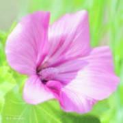 Pink Hollyhock Flower Poster