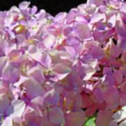 Pink Hydrangea Flower Floral Art Prints Baslee Troutman Poster