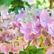 Pink Hydrangea Flower Garden Art Prints Baslee Troutman Poster