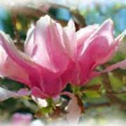 Pink Magnolia Blossoms Poster