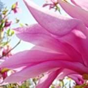 Pink Magnolia Flower Art Print Botanical Tree Baslee Troutman Poster