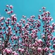 Pink Magnolia Splendor Poster
