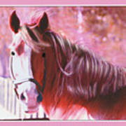 Pink Mare Poster
